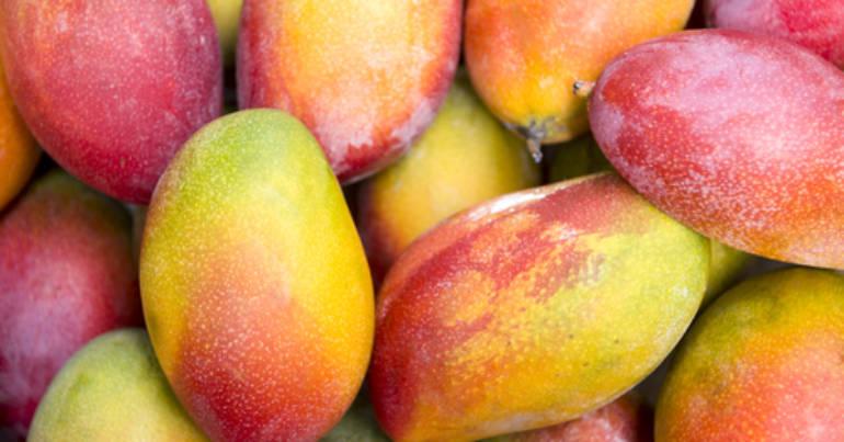 Produkt des Monats: die Mango