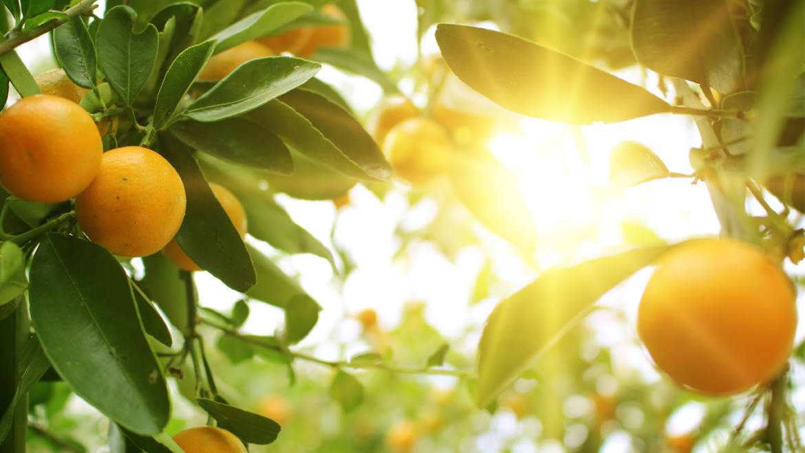 Product of the month: Orange oil