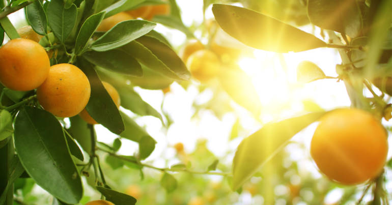 Produkt des Monats: Orangenöl