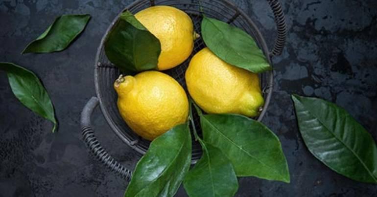 Produkt des Monats: die Zitrone