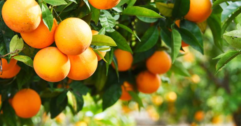 Produkt des Monats: die Orange