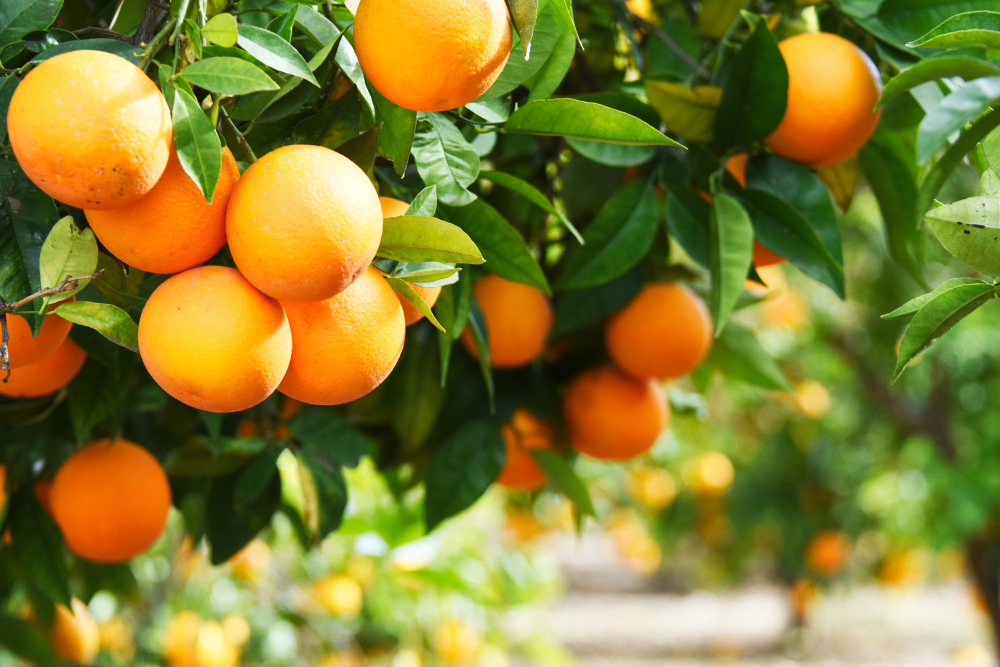 Product of the month: orange